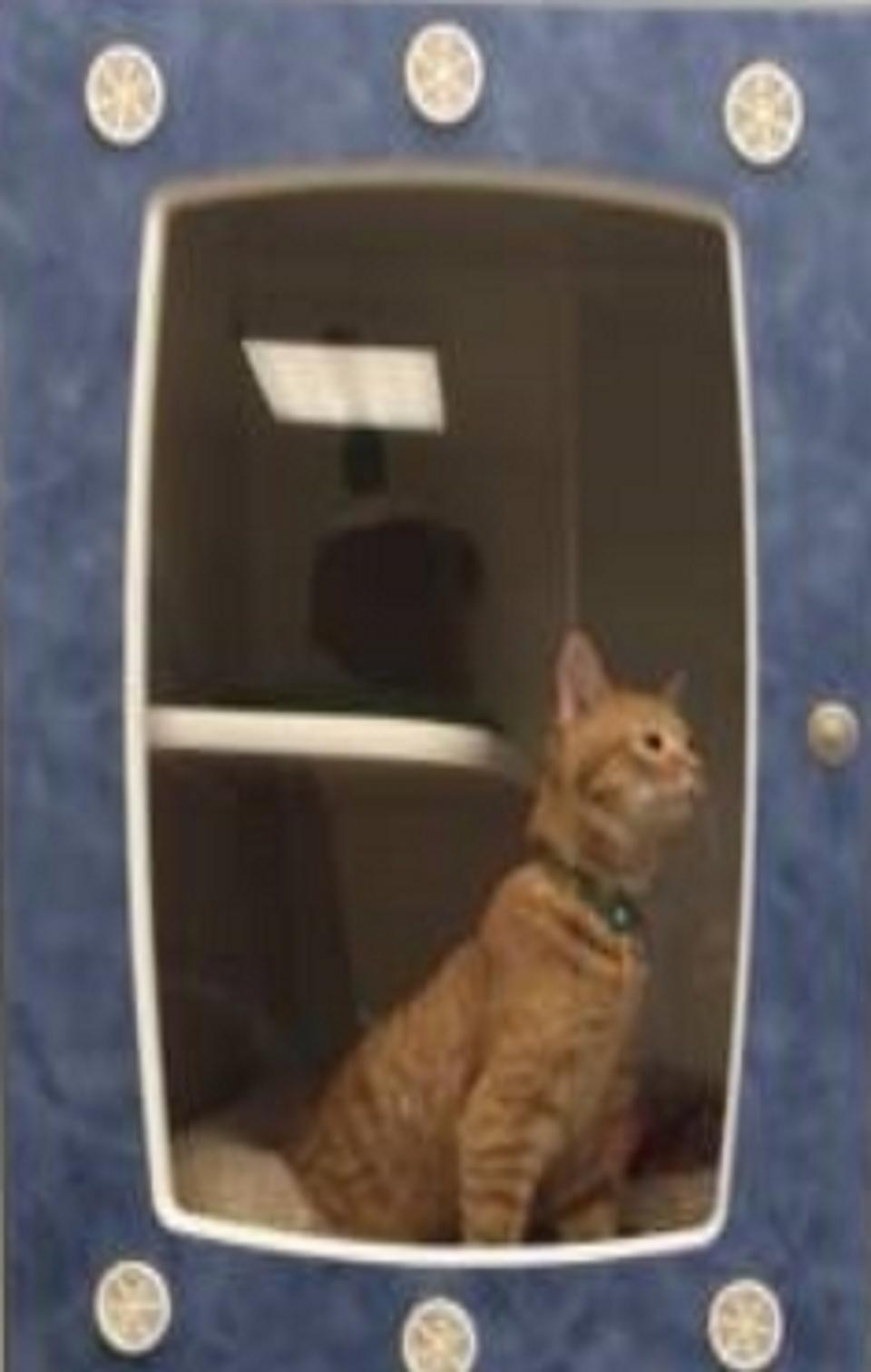 Dog and Cat Boarding :: Family Pet Clinic Of Redondo Beach