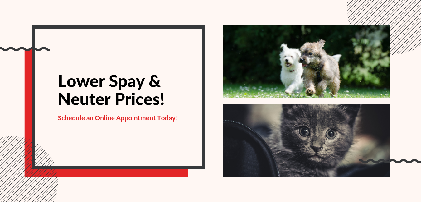 Pet Spay & Neuter Promotion